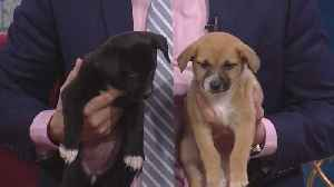 Cute Quintet Joins Us For National Puppy Day [Video]