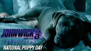 "John Wick Chapter 3 Parabellum - ""Happy National Puppy Day"" - Keanu Reeves [Video]"