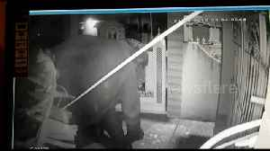 Now that's a gate-crasher! Hungry elephant breaks into Indian home [Video]