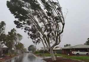 Tree in Wickham, Western Australia, Bends Under Severe Cyclone Veronica Gusts [Video]