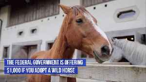 Adopt A Wild Horse And Get A Thousand Dollars [Video]
