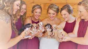 Iowa Bride Has Rescue Dogs Instead of Flowers at Her Wedding [Video]