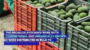 Avocados Recalled in Six States Over Listeria Contamination [Video]