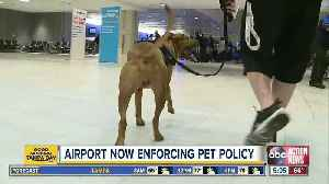 Tampa International Airport steps up enforcement of non-service animals [Video]