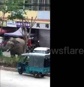 Wild elephant wanders around Chinese town, damaging houses and vehicles [Video]