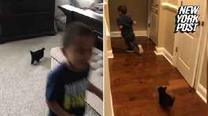 Toddler runs in terror from adorable puppy [Video]