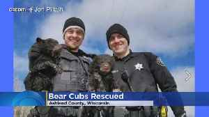 Deputies Rescue 2 Bear Cubs Trapped In Flooded Den [Video]