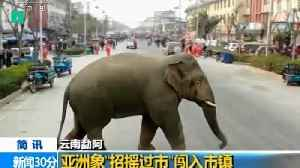Lost Wild Elephant Takes A Stroll Through Chinese Town [Video]