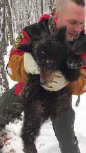 Wildlife Officer Rescues Bear Cub Trapped Inside Hollow Tree [Video]
