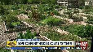 More community gardens may be coming to Hillsborough County [Video]