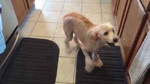 Dog Can't Contain Excitement for his Food [Video]