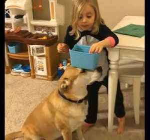Dog Helps Little Girl with Everyday Activities [Video]