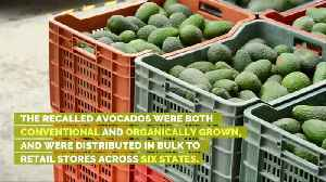 Avocados Recalled in 6 States Due to Listeria Concerns [Video]