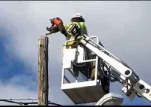 Utility Worker Rescues Cat Stuck on Telephone Pole [Video]