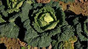 Kale Ranks As No. 3 Most Pesticide-Contaminated Crop [Video]