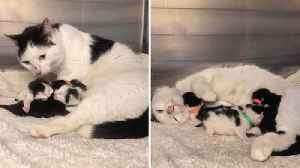 Please Mind The Cat! Litter Of Kittens Rescued From Under Tube Station Escalator [Video]