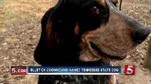 Bluetick Coonhound named official Tennessee state dog [Video]