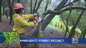 Crews Clear Out Ukiah Forest To Prevent Future Wildfires [Video]