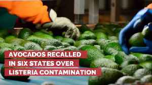 If You Eat Avocados Then Read This Now [Video]