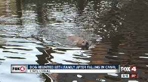 Dog reunited with family after falling in Cape Coral canal [Video]