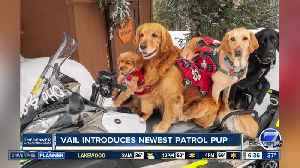 Vail introduces newest patrol pup [Video]