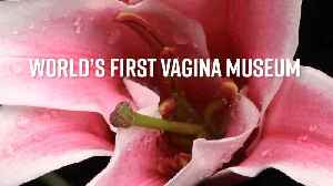 3 fast facts about the new Vagina Museum [Video]