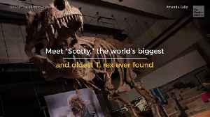 Meet the Biggest T-Rex That Ever Lived [Video]