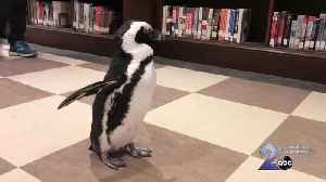 Penguin visits the Pratt; checking out books for chicks [Video]