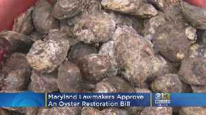 Maryland Lawmakers Approve Oyster Restoration Bill [Video]