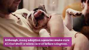 The Annual Cost of a Puppy Is More Than the National Average for Two Months' Rent [Video]
