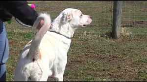 This week's Furry Friends come from Last Chance Ranch Animal Rescue [Video]