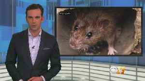 Blackout On I-30 Blamed On Rats Gnawing Through Wires [Video]