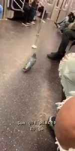 Pigeon walks around subway train [Video]