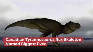 The Biggest T-Rex Was A Canadian [Video]