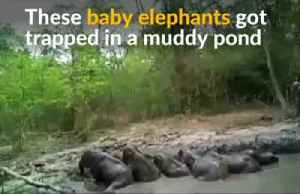 Six baby elephants rescued from mud pond in Thailand [Video]