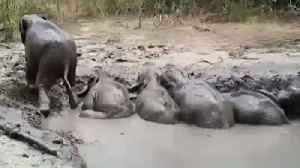 Web Extra: Elephants Stuck In The Mud [Video]
