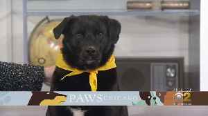 PAWS Pet Of The Week: Rani [Video]