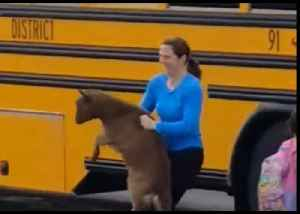 Not All Kids Are Welcome on School Bus as Goat Gets Promptly Ejected [Video]
