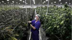 Marijuana Retailer Agrees To Buy Another For $825 million [Video]