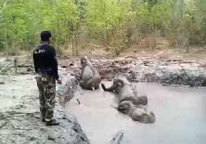 Elephants Rescued From Mud Hole in Thai National Park [Video]