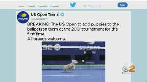 US Open To Add Puppies To Ballperson Team (Well, Not Really...) [Video]
