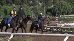 Two Days After Santa Anita Reopens, 23rd Horse Dies in Racing Accident [Video]