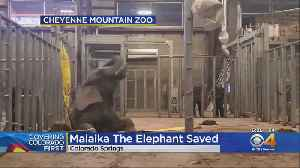 Elephant Had To Be Rescued At Cheyenne Mountain Zoo [Video]