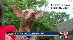 Dognapper captured on surveillance video stealing elderly woman's Chihuahua [Video]