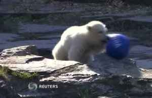 Berlin polar bear cub named after Hertha soccer club [Video]
