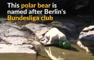 Berlin zoo unveils name of new polar bear cub [Video]