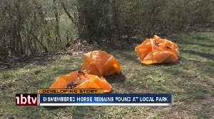Dismembered horse remains found in disc golf course [Video]