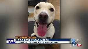 Police need help finding Taffy the dog who went missing after car accident [Video]