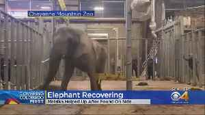 Malaika The Elephant Hoisted To Her Feet At Cheyenne Mountain Zoo [Video]