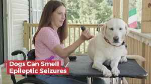 Dogs Can Smell Some Seizures And Save Lives [Video]